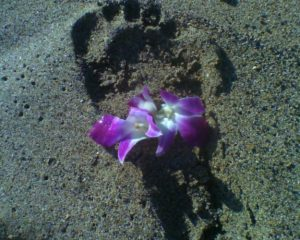 Footprints in the Sand…and other gifts